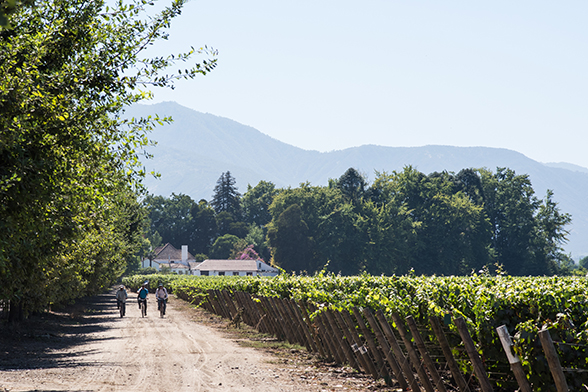 Three laborers ride to work at the Viu Manent Winery in Valle Colchagua in central Chile.