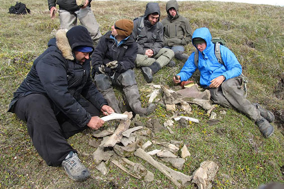 The students lay out the fossils they have collected.