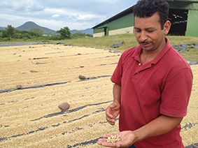 Marvin explains how green coffee beans are dried and processed.
