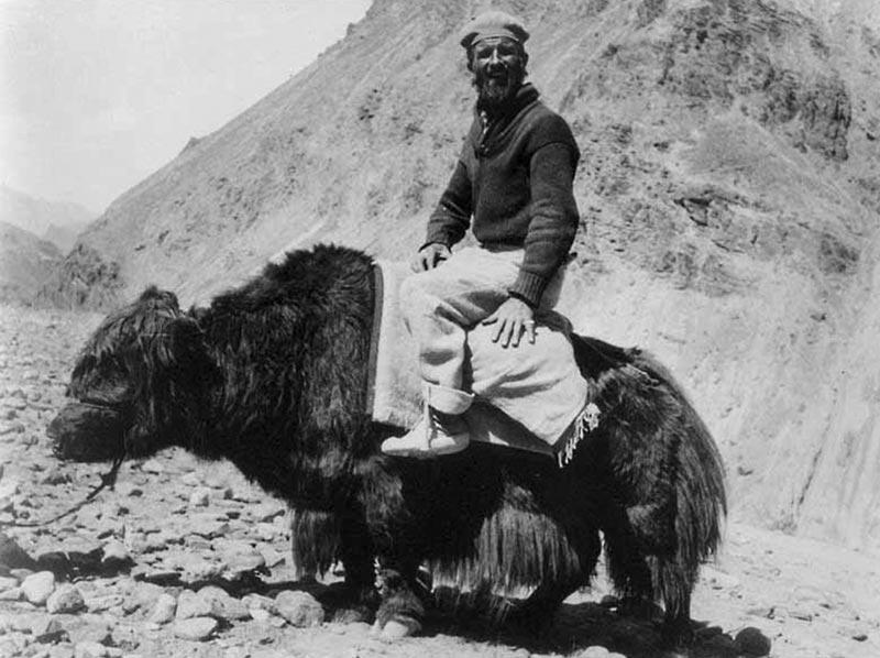Walter Koelz riding a yak. (Credit: Walter Koelz Collection, Bentley Historical Library)