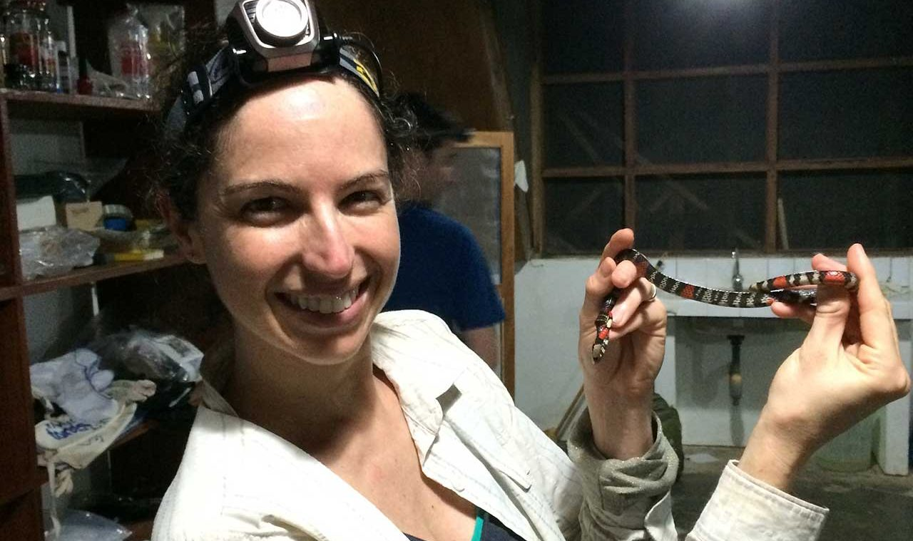 U-M researcher Alison Davis Rabosky shows the coloration on a harmless coral snake mimic, Atractus elaps. Photo: Dan Rabosky