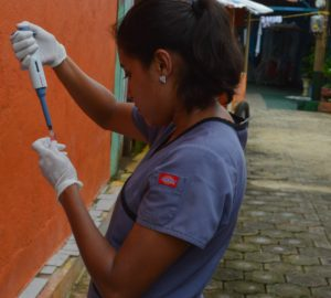 Study team member Ingrid Massiel Mercado processes a blood sample in a neighborhood in Managua in June 2017 as part of the Nicaraguan Pediatric Dengue Cohort Study (PDCS), a long-standing pediatric dengue cohort established in 2004. Image credit: Sustainable Sciences Institute, Paolo Harris Paz