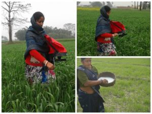 Women applying fertilizer via traditional method. Photo courtesy of: CIMMYT