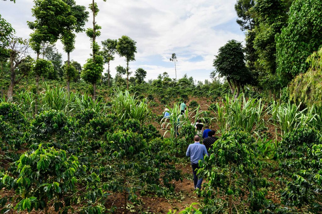 U-M Engineering students visit DeMan Coffee plantation in Nkubu, Kenya